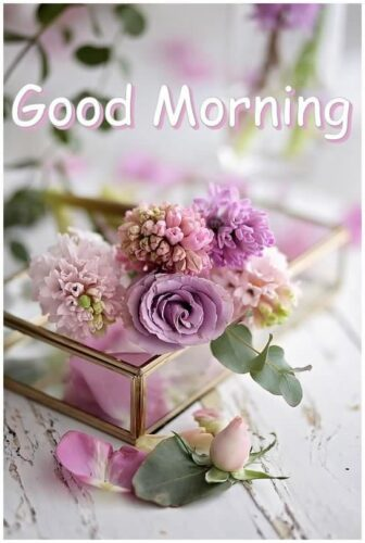 Good Morning Rose flowers images