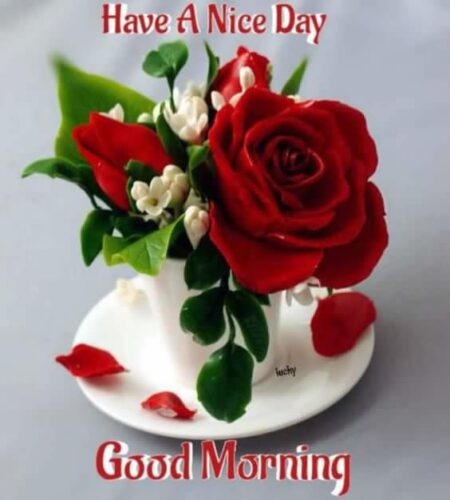 Best Good Morning greeting rose images