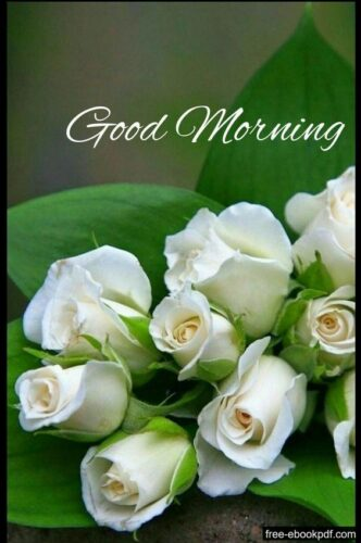 Good Morning wishes White rose images