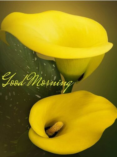 Lovely Good Morning wishes images