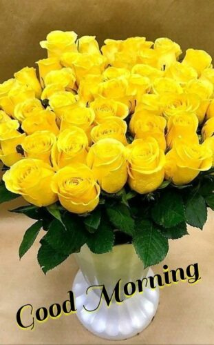 Latest Good Morning wishes Yellow rose images