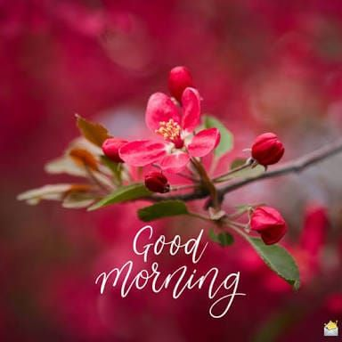 Beautiful Flowers images wishing Happy Good Morning