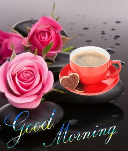 Good Morning wishes rose images