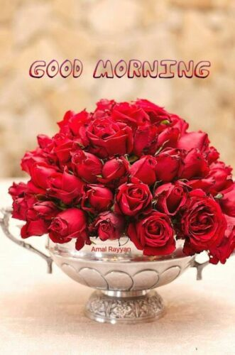Latest Good Morning Rose Images for status