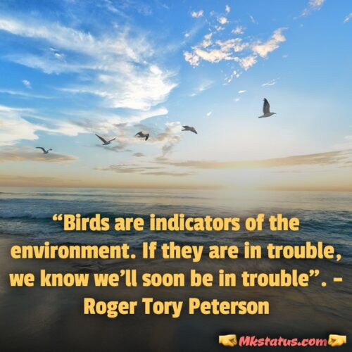 Latest World Environment Day Slogan and Quotes in english