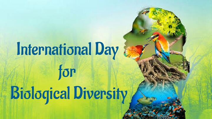 International Day for Biological Diversity 2020 Themes