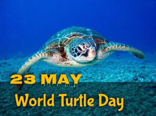 World Turtle Day wishes images