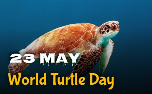 23 May World Turtle Day wishes images
