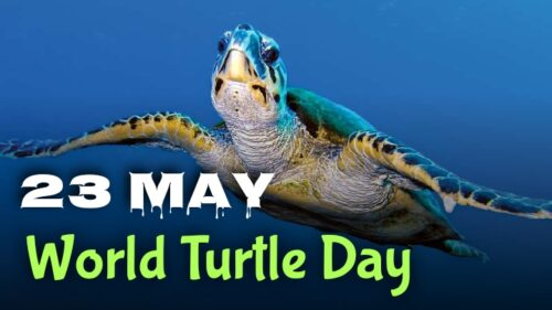 Download World Turtle Day wishes images