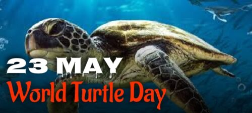 Latest World Turtle Day wishes images for status