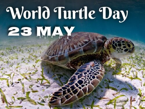 23 May World Turtle Day wishes images for status