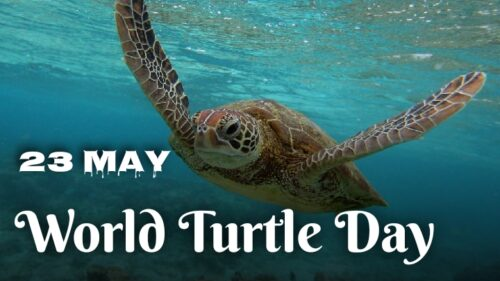 World Turtle Day 2020 Theme and images
