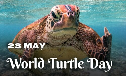 Beautiful Images greeting World Turtle Day 2020