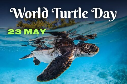 Top World Turtle Day 2020 greeting pictures