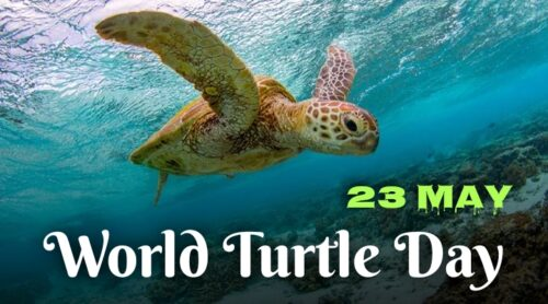 Best New World Turtle Day 2020 greeting images