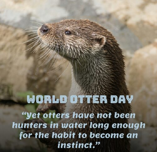 World Otter Day Messages