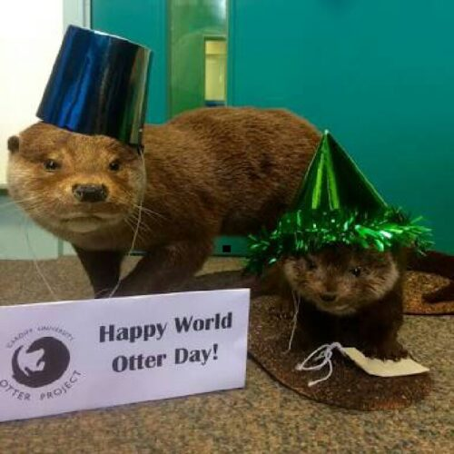 World Otter Day 2020 Images
