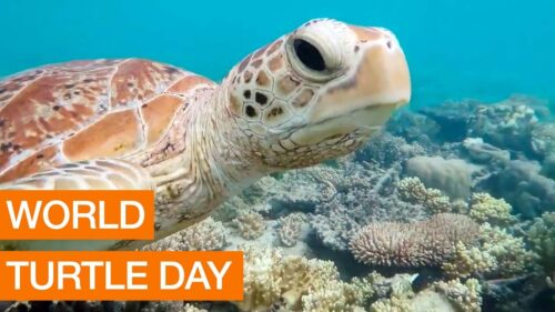 New World Turtle Day 2020 greeting photos