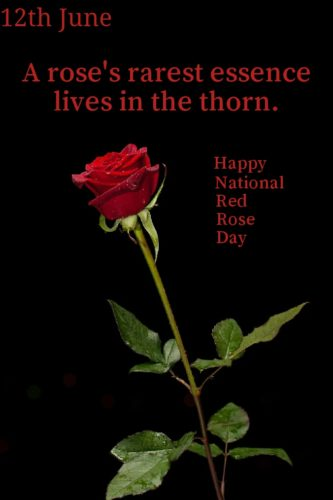 National Red Rose Day 2020 images for status and DP