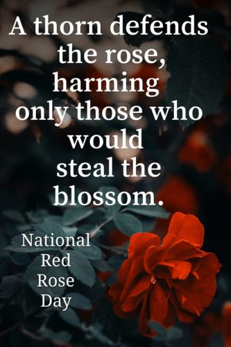 National Red Rose Day 2020 quotes images for status and DP
