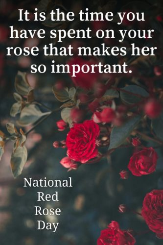 Lovely Quotes about  National Red Rose Day 2020