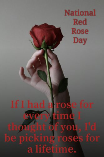 Beautiful images wishing National Red Rose Day