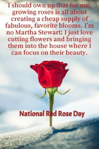 Mind lowing Quotes about National Red Rose Day