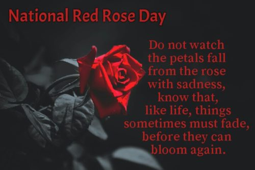 Download best new National Red Rose Day 2020 greeting Quotes pictures