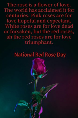 National Red Rose Day 2020 greeting Quotes pictures