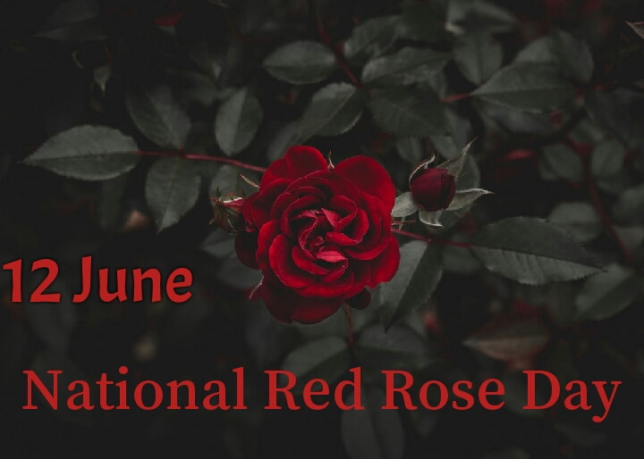 National Red Rose Day 2020 greeting pictures