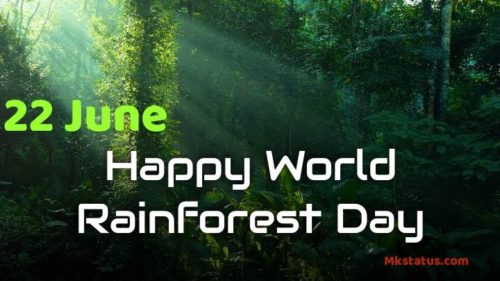 Best new World Rainforest Day 2020 images