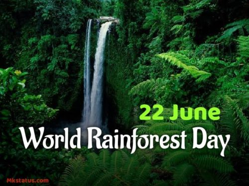 World Rainforest Day 2020 images & Photos