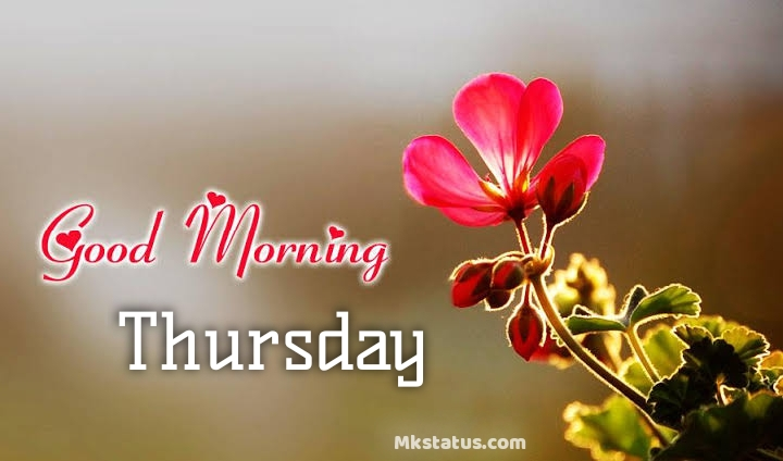 Good Morning Thursday Quotes Messages Images Happy Thursday
