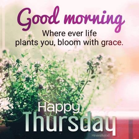Good Morning Thursday Blessing Quotes pics