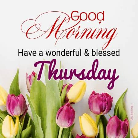 Beautiful flower Happy Good Morning Thursday images