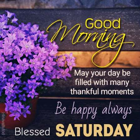 Beautiful Flowers wishes Happy Good Morning Saturday images