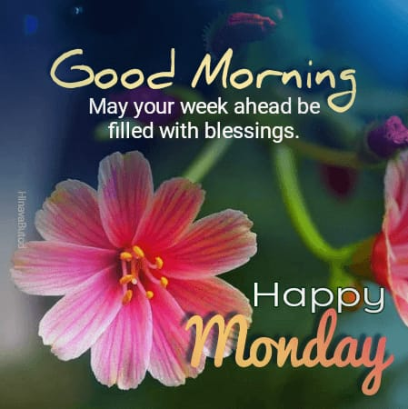 Good Morning Monday flowers images
