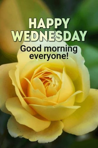 Download Good Morning Wednesday Status images