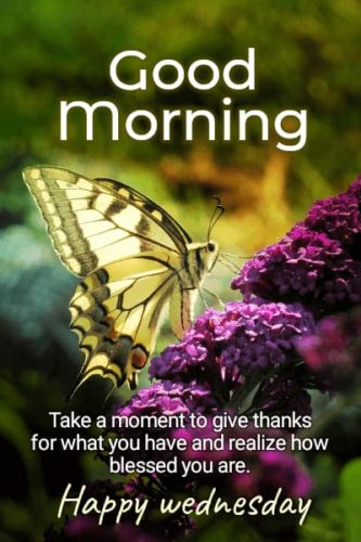 Best Good Morning Wednesday Status images