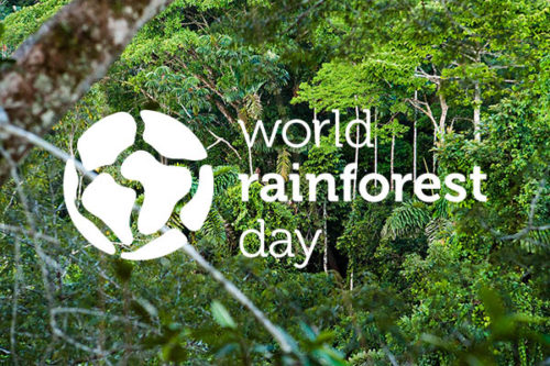 World Rainforest Day 2020