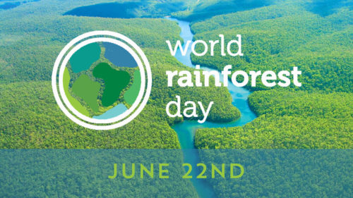 World Rainforest Day images