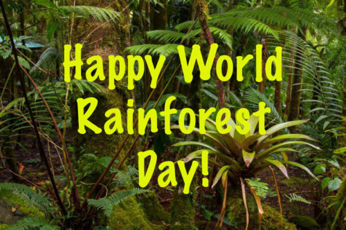 Happy World Rainforest Day wishes images