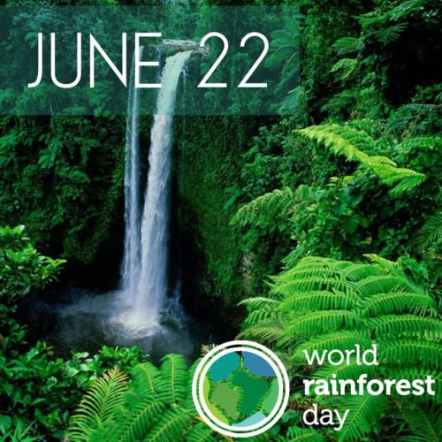 World Rain-forest Day wishes images for status