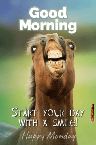 Good Morning Monday funny images