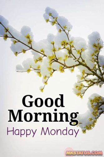 Good Morning Monday wishes images for Instagram DP and Status