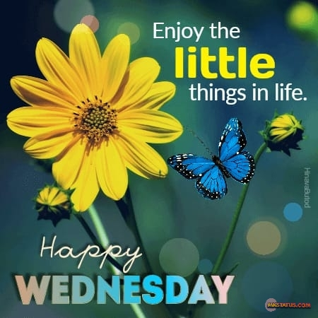 Good Morning Wednesday Quotes with flower Background image.
