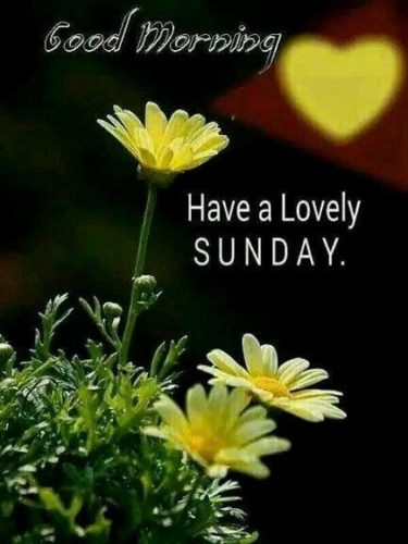 Good Morning Happy Sunday images for Face book status