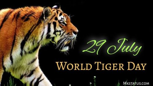 International Tiger Day 2020 wishes images   29 July