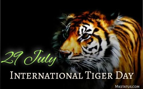 29 July International Tiger Day wishes images