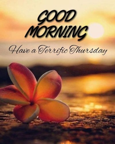 Good Morning Thursday Have a nice day images